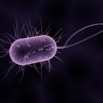 ピロリ菌、一回で除菌できました